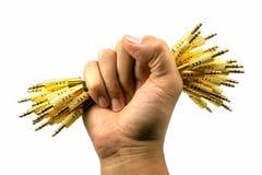 Правая рука держа тональнозвуковой jack Стоковая Фотография RF