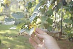 Правая рука достигая лист Стоковые Фото