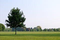 правитель s парка 19 london Стоковое Изображение RF