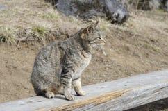 Правильная позиция кота стоковая фотография