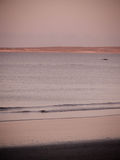 Правильный кит от пляжа Стоковая Фотография