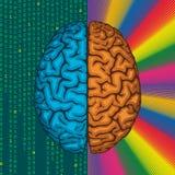 Правый и левый мозг. Иллюстрация штока