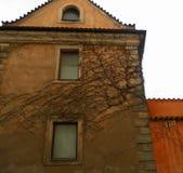 Прага с курчавым домом на дереве Стоковая Фотография RF