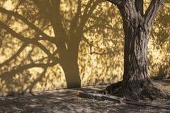 Прага - тени акаций для стены Capuchins уединяют стоковая фотография