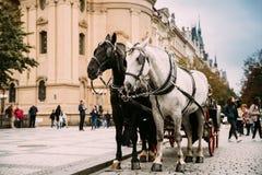Прага, Чешская Республика 2 лошади в старомодном тренере на старой городской площади Стоковое фото RF