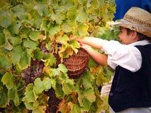 Празднество хлебоуборки виноградины Стоковые Изображения RF