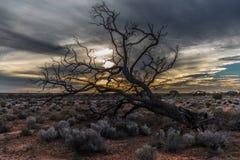 Праздник в Австралии - национальный парк Campbell порта национальный парк Стоковое фото RF