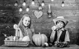 Праздник сбора падения Идея фестиваля падения начальной школы Отпразднуйте фестиваль сбора Овощи мальчика девушки детей свежие стоковые фото