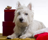 праздник собаки стоковая фотография rf