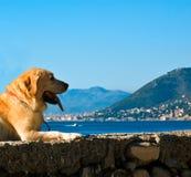 праздник собаки Стоковые Фото