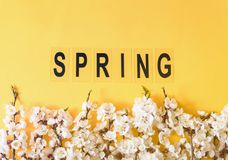 Праздничная предпосылка на праздники весны Цветки весны на предпосылке цвета Цветение абрикоса r стоковые фото