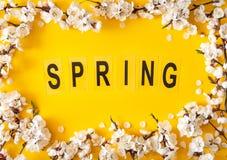 Праздничная предпосылка на праздники весны Цветки весны на предпосылке цвета Цветение абрикоса r стоковое фото