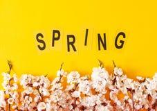 Праздничная предпосылка на праздники весны Цветки весны на предпосылке цвета Цветение абрикоса r стоковые изображения rf