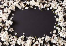 Праздничная предпосылка на праздники весны Цветки весны на черной предпосылке Цветение абрикоса r стоковые изображения rf
