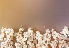 Праздничная предпосылка на праздники весны Цветки весны на черной предпосылке Цветение абрикоса r стоковое изображение
