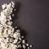 Праздничная предпосылка на праздники весны E r r стоковая фотография rf