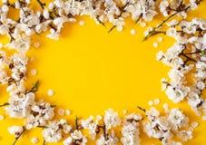 Праздничная предпосылка на праздники весны Цветки весны на предпосылке цвета r r стоковое фото rf