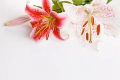 Праздничный состав цветка на белой предпосылке Надземный взгляд Стоковое Фото