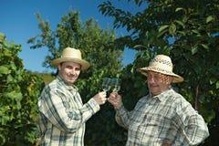 праздновать winemakers сбора винограда стоковая фотография