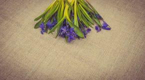 Праздничная карточка пасхи с цветками весны Стоковая Фотография