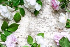 Праздничные розы цветут состав на белой деревянной предпосылке Стоковая Фотография RF