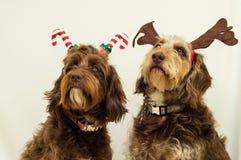 Праздничные собаки Стоковая Фотография