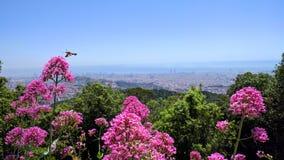 Праймер plano Барселоны altura flores Стоковые Фотографии RF