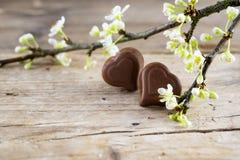 2 пралине сердца шоколада белая blossoming ветвь на деревенском Стоковое фото RF