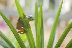 Пребывание лягушки на лист стоковая фотография