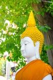 Пребывание статуи Будды с зеленым большим деревом в Таиланде стоковое фото rf