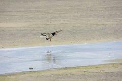 Пребывание чайки на песке в Норвегии стоковые изображения rf