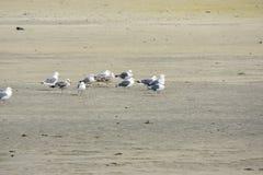 Пребывание чайки на песке в Норвегии стоковые изображения