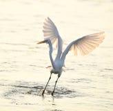 Пребывание Egret в воде стоковые изображения