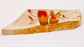 превращенная в камень древесина Стоковое Изображение RF