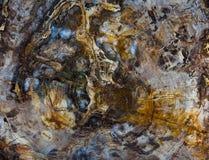 превращенная в камень крестом секвойя раздела Стоковое Изображение