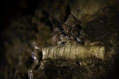 Превращенный в камень конец-вверх Стоковое Изображение RF