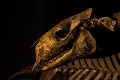 Превращенный в камень череп Стоковое фото RF