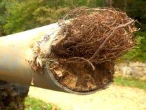 Преграженная труба дренажа Стоковое Изображение RF