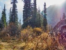 Предгорья покрытые с лесом, освещенным по солнцу стоковое изображение