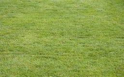 предложение травы Стоковые Фото