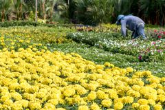 Предложите цветки в садовничать на улице Бангкока Стоковое Фото