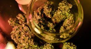 Предложите цену бутоны марихуаны сильного напряжения с изображением cannabidiol формулы CBD стоковое изображение