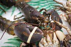 Предложите цену свежий живой сырой омар Близкий поднимающий вверх взгляд наградных естественных морепродуктов стоковые изображения