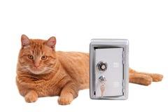 предохранитель кота Стоковое Фото