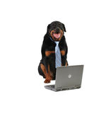 предохранитель собаки счастливый Стоковая Фотография RF