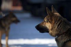 предохранитель собаки Стоковые Изображения