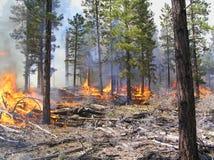 предписанный пожар стоковые фотографии rf