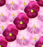 Предпосылка Ð'eautiful флористическая фиолетов стоковые изображения