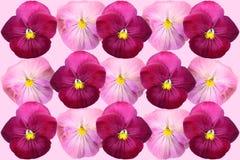 Предпосылка Ð'eautiful флористическая фиолетов стоковое фото rf