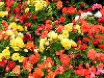 Предпосылка абстрактного вектора геометрическая - цветки, низкий поли стиль Стоковые Изображения